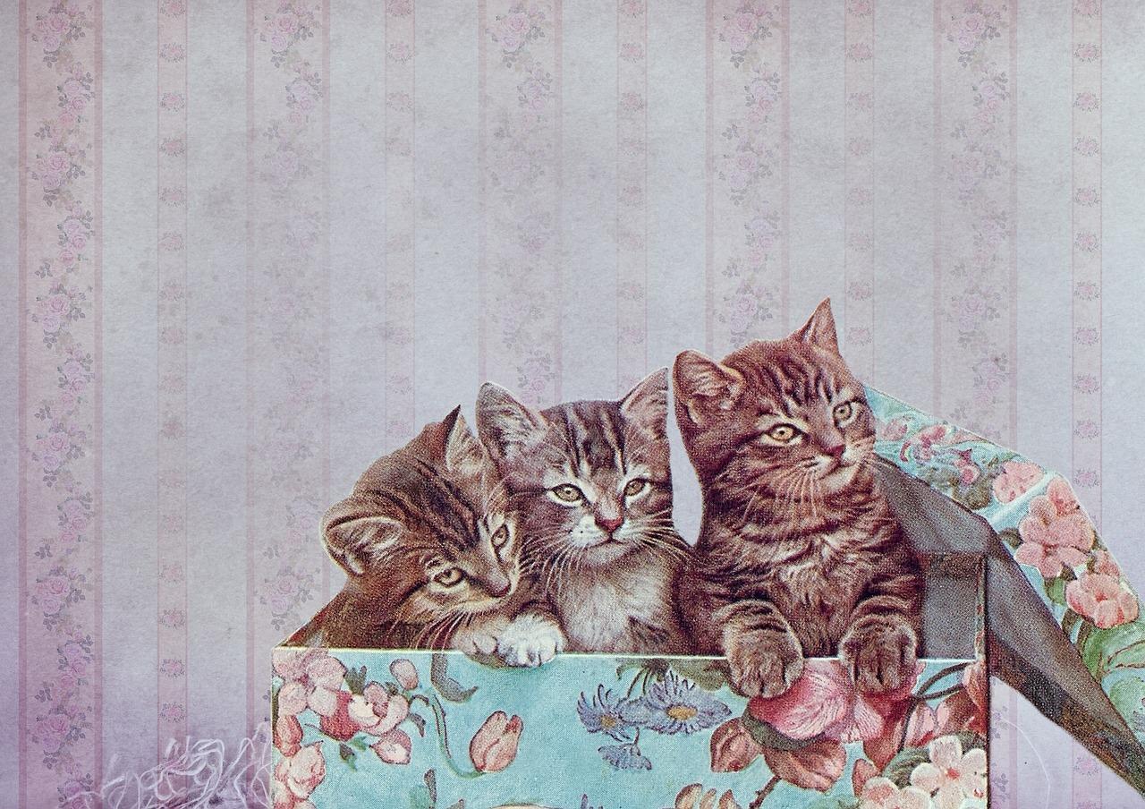 Faire un cercueil en carton pour votre animal de compagnie