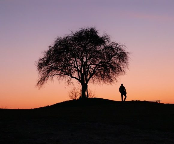 Urnes-arbre