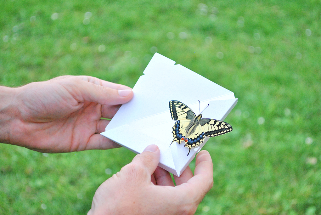 Papilys entreprise envolee de papillons enterrement